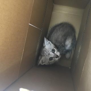 保護猫の里親さんを探しています。