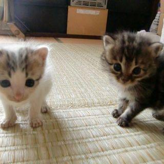 保護した仔猫の里親募集2匹