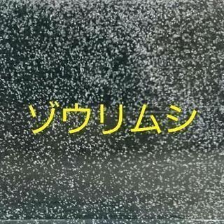 【生き餌】ゾウリムシ★500ml
