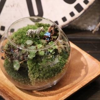 癒し体験!ミニ苔リウム&ミニ苔盆栽作り