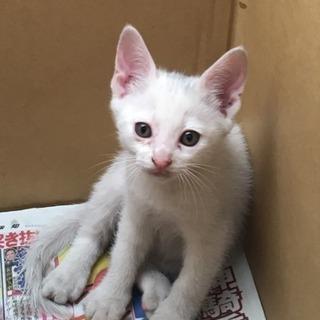 触れる生後2.3か月の子猫