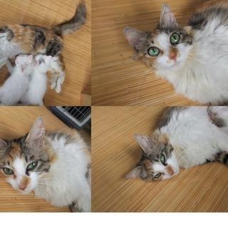 ☆生後1ヶ月半の子猫さんを大切に育てて頂ける方募集してます☆ 【飼い主不在確認済み】の画像