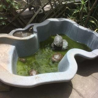 プラ池 鯉 亀 金魚 露天風呂 等 大きいよ