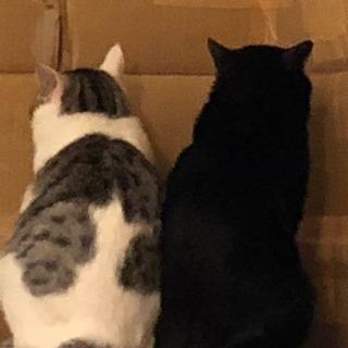 黒猫とハート模様猫
