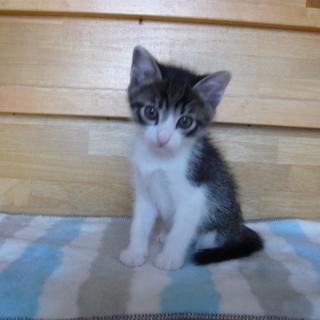かわいい子猫ちゃんを育ててみませんか?