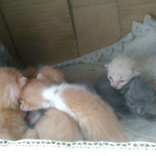 6月の初めに生まれた野良猫の子猫7匹