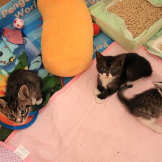 子猫3匹(オス1、メス2)→3匹とも里親様が決まりました