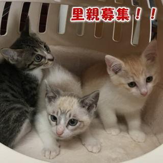 子猫4匹の里親募集!1ヶ月半~2ヶ月半くらいです。★可愛いです★