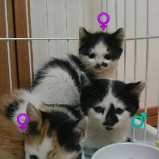 子猫の里親さま募集