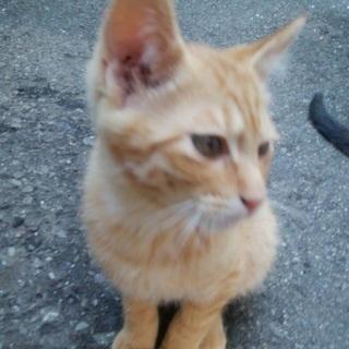 【急募】生後2ヶ月くらいの4匹の仔猫ちゃんです。