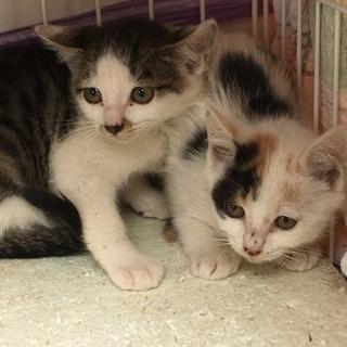 生後2ヶ月の子猫がいます