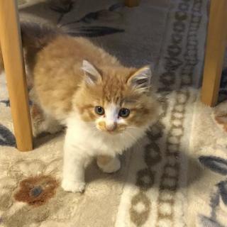 可愛い猫にゃん