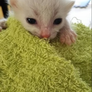 ハートマーク付きの子猫です