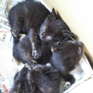生後約2ヶ月の子猫を保護しています。里親になっていただける方募集