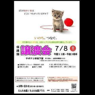 保護猫 譲渡会🐈🐈🐈