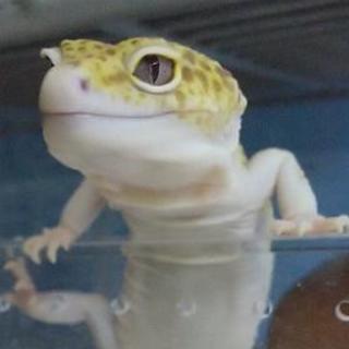 大分市で爬虫類友達募集してます😃✨