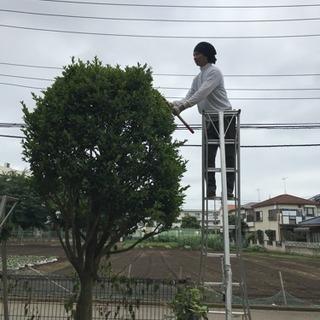 庭の手入れ 伐採店 ツチヤガーデンホーム(所沢市 狭山市富士見市...