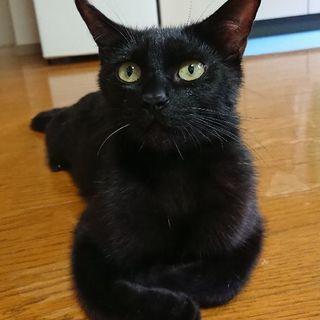 黒猫の里親さんを探しています