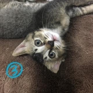 【里親様募集】福岡周辺 兄弟 子猫 3匹