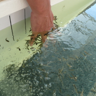 FISH SPA 角質がキレイに取れる。。。仕事終わりには入浴可