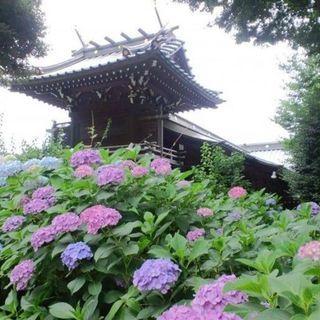 6月24日(日) 【20代限定企画】白山神社&六義園あじさい鑑賞ウ...