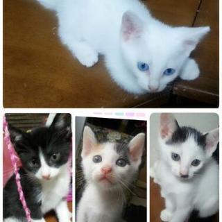 5匹兄弟 子猫チャン