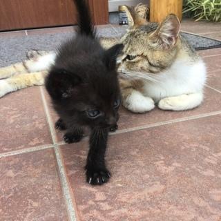 可愛い子猫、大事にしてくれる方、もらっていただけませんか?