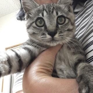 1匹だけ生き残った強運のオス仔猫の里親募集です