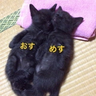 生後1ヶ月の子猫たち