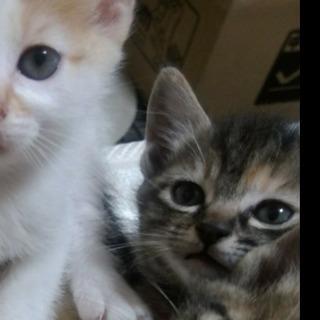 5月11日生まれの子猫です★キジトラ