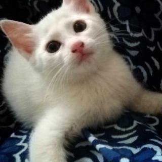 真っ白な可愛い子です