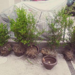 植木 値引き