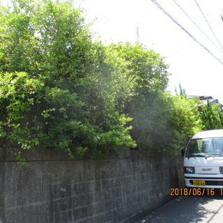 福岡、空き家、不用品、植木の徹去、草刈り、ジャングル、格安。ユン...