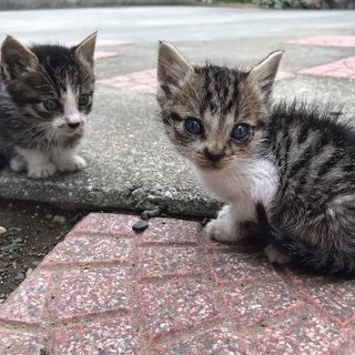 可愛い子猫の里親募集中