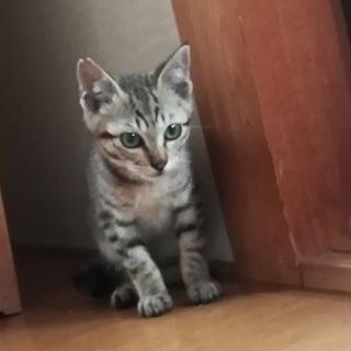【我が家の猫となりました】里親募集!近所で猫を保護しました!パート2