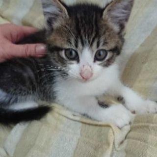 2ヶ月弱の4兄弟の1匹です - 猫
