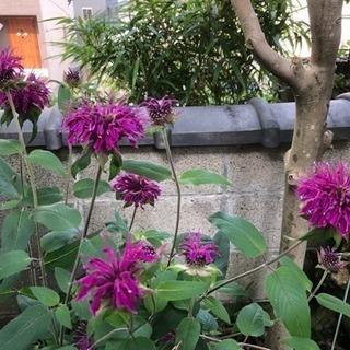 この花の名前を教えて下さい🙇♀️