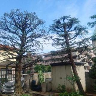 お庭のお手入れ 植木屋をお探しの方! − 千葉県