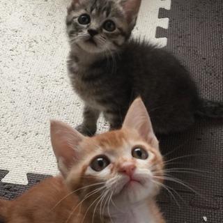 2ヶ月の兄弟猫✩⃛