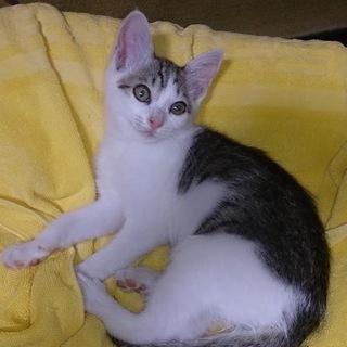 生後3ヶ月程度のメス猫を貰って頂ける方募集しています。