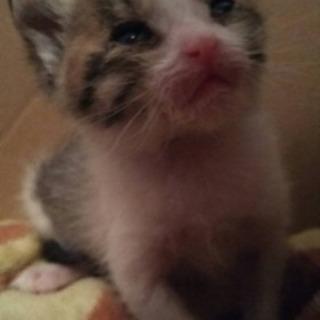 可愛い子猫ちゃんと家族になって下さる方募集します。