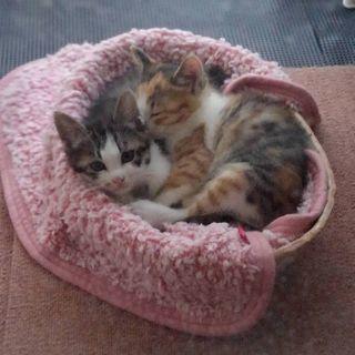 2ヶ月の仔猫です😃の画像