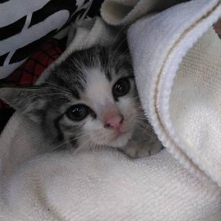 生後1ヶ月の子猫です!