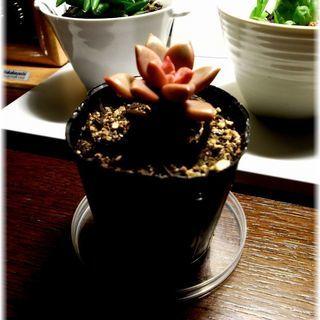 【多肉植物寄植えの彩に】『ブロンズ姫』2号ポット入り苗꒰◍ᐡᐤᐡ◍꒱