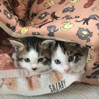 子ネコの家族になってくださる方を探しています!
