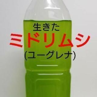 【高品質】ミドリムシ(ユーグレナ)500ml!生存率向上いき餌 ...