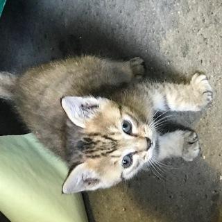 生後3か月の子猫3匹の里親募集