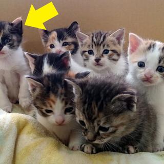子猫の里親募集 (仮名:ミミィ)の画像