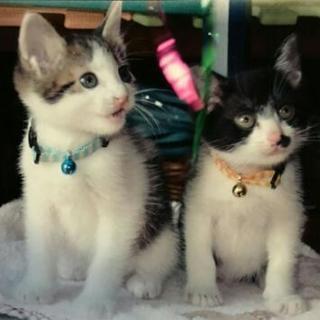 生後2ヶ月位の仔猫