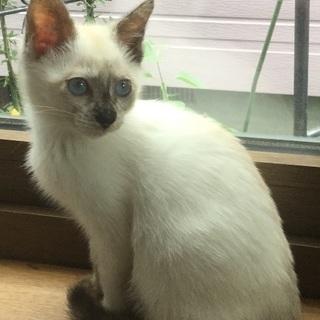 美しい子猫 ミィちゃん